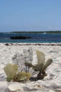 Sea Feathers Beach Stillife 2